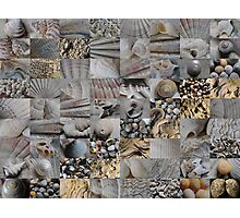 Shells from Argyll Photographic Print