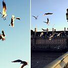 flight by Gabrielle Agius