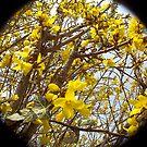 flowers lellow by hmmmbates