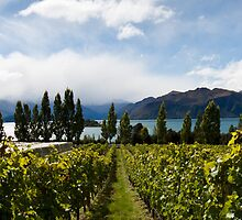 Rippon vineyard, Lake Wanaka by gematrium