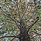 Backyard Tree by Shari Mattox