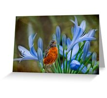 Robin in flowers Greeting Card