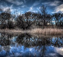 March Marsh by Bob Larson