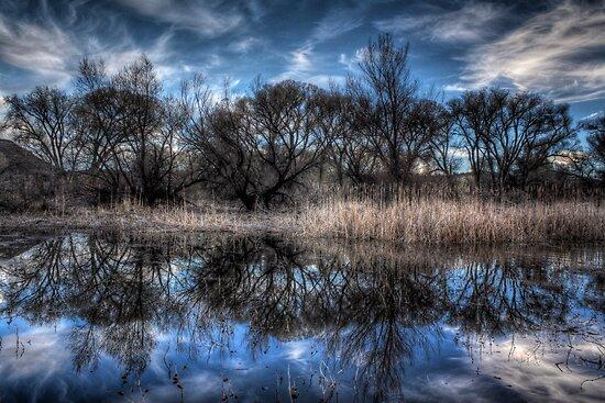 March Marsh by Bob Larson