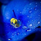Blue by Niko Mönkkönen