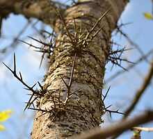 Dangerous Honey Locust Tree by Sean Paulson