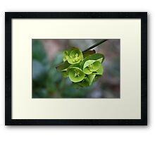 Hanging green bells Framed Print