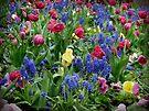 Spring Garden by Lucinda Walter