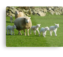 The Noise Of The Lambs Metal Print