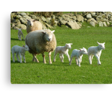 The Noise Of The Lambs Canvas Print