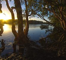 Rope Swing over Lake Ainsworth #2 by Daniel Rankmore