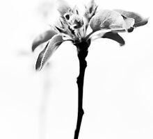 New beginings. by Cindy Crossley