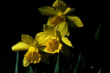 Golden Bells by Lois  Bryan