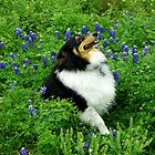 'Spirit' amongst the Bluebonnets by Charmiene Maxwell-batten