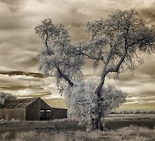 Out the back and forgotten by John Conway