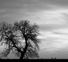Black and White Country Morning by Bo Insogna