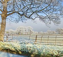 Frosty Morning by AnnDixon