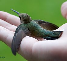 Hummingbird in Hand by JanetBethuy