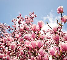 Magnolia by Jeff Palm Photography