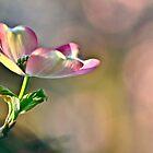 Spring Has Sprung, New Life Has Finally Begun... by Ainsley Kellar Creations