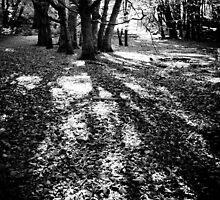 Escape from the Dark Dark Woods by Silken Photography