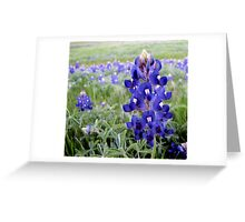 Bluebonnets - Texas State Flower Greeting Card