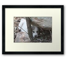 Goliath Peek A Boo Framed Print