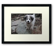 Goliath's Leap Of Love Framed Print
