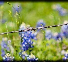 Fenced in. by guppyman