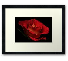 The red roze Framed Print