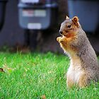 Squirrel! by Nevermind the Camera Photography