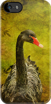 Black Swan iPhone Case by Lois  Bryan