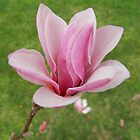 Magnolia 2 by Heather Crough