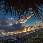 Pandanus Horizon by Daniel Rankmore