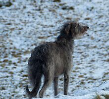my hearts in the highlands by joak