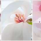 Pretty in Pink... by LindaR