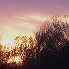Sunset behind trees by Tyler Elbert