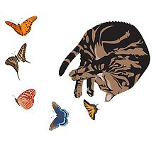 Sleeping Cat with Butterflies by BurrowsImages
