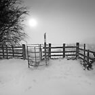 Misty Winter Walk BW by Andy Freer