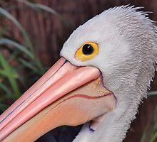 Portrait of an Australian Pelican by Geoffrey Higges