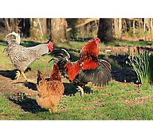 Do'en The Funky Chicken Photographic Print