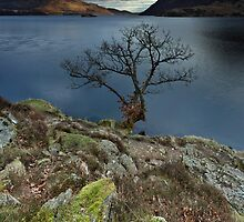 Ullswater Tree by Brian Kerr