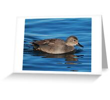 Gadwall Greeting Card