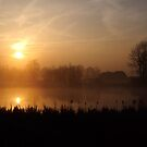 Golden morning by Javimage