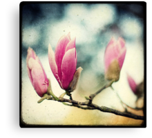 No Spring Without Magnolia Canvas Print