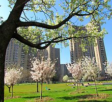 Spring afternoon in Bronx, New York City by Alberto  DeJesus