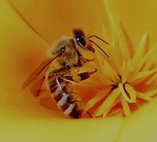 Busy bee by John E. McAlear