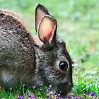 Spring Bunny by Ticker