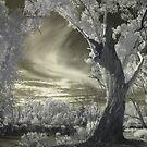 L'arbre cauchemar by lightsmith