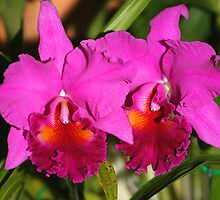 Bright Pink Orchids by Carole-Anne